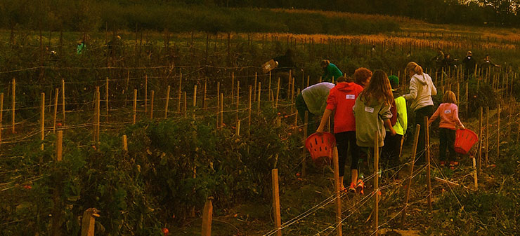 Volunteering at America's Grow a Row